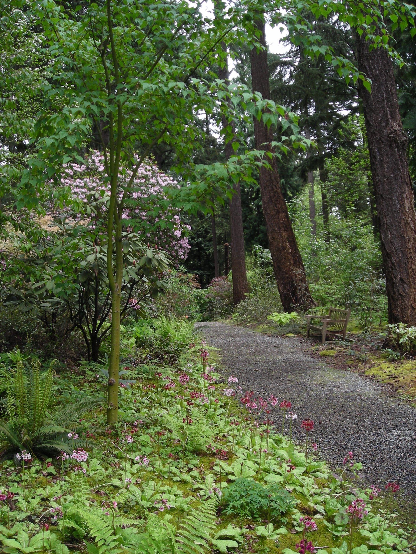 Woodland Garden, Rhododendron Species Botanical Garden