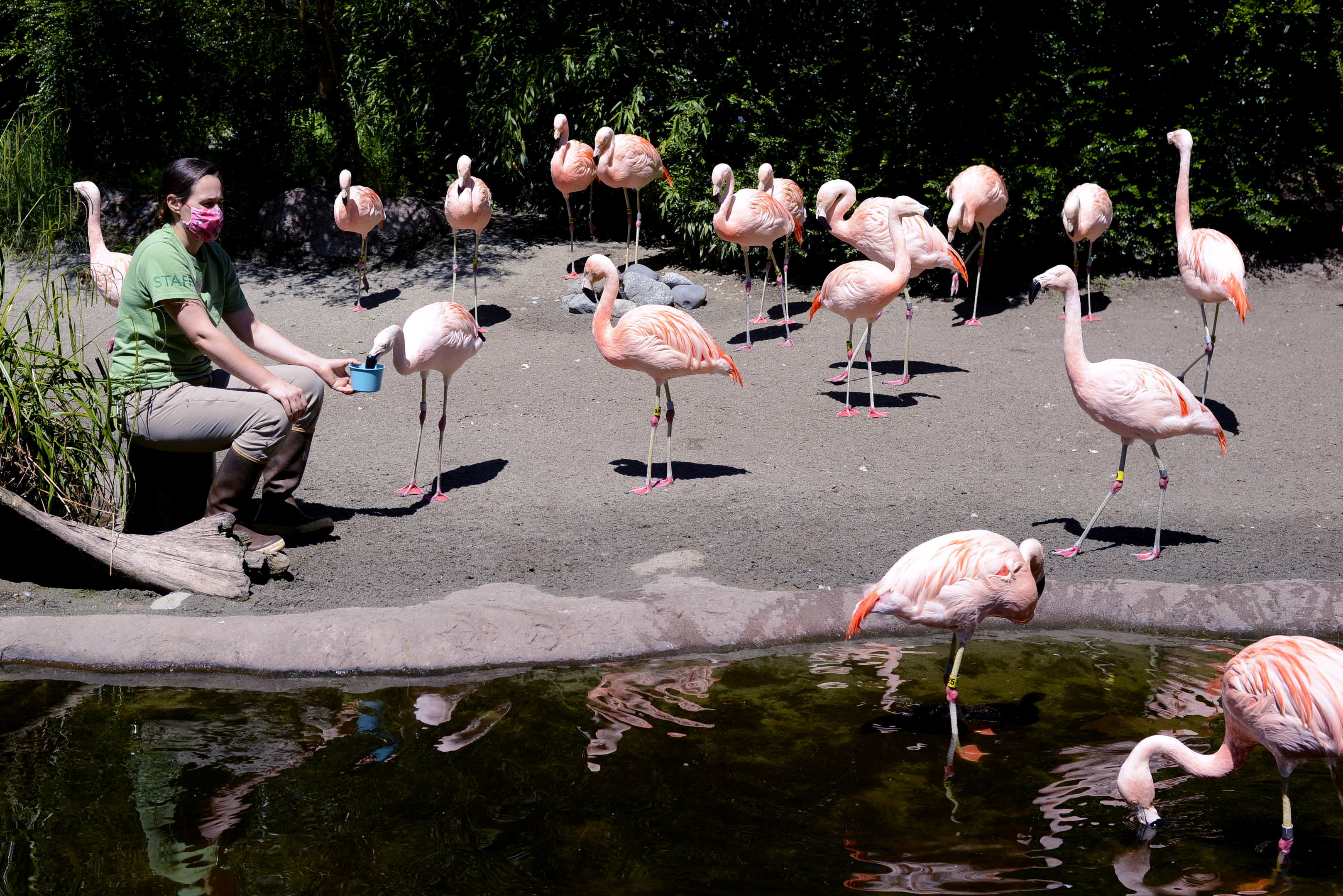 Without visitors, Woodland Park Zoo animals entertain themselves