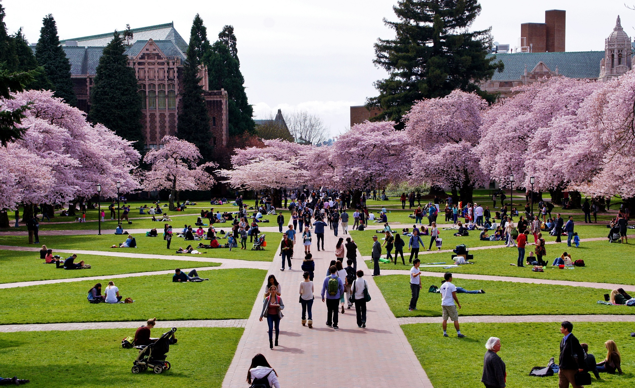 why some uw professors want a union and others resist one crosscut