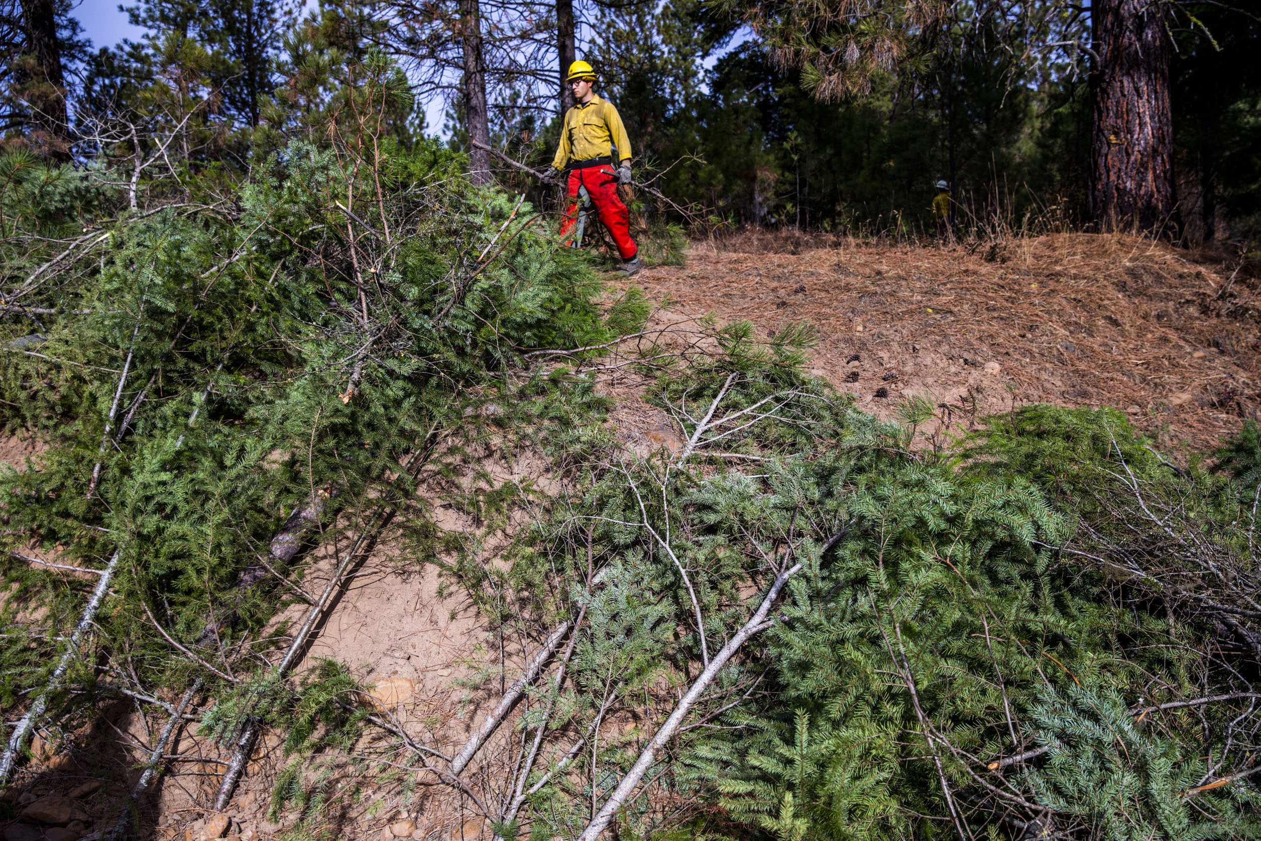 Crews work on thinning parts of the Teanaway Community Forest on Wednesday, Oct. 24, 2018, as a part of Washington State Lands Commissioner Hilary Franz's forest health treatment plan. The Department of Natural Resources is implementing the treatment plan which uses sections of dying forest for cross laminated timber. Franz says this plan will also help keep the cost of wildfire suppression down and make forests more resilient to wildfires. (Photo by Dorothy Edwards/Crosscut)