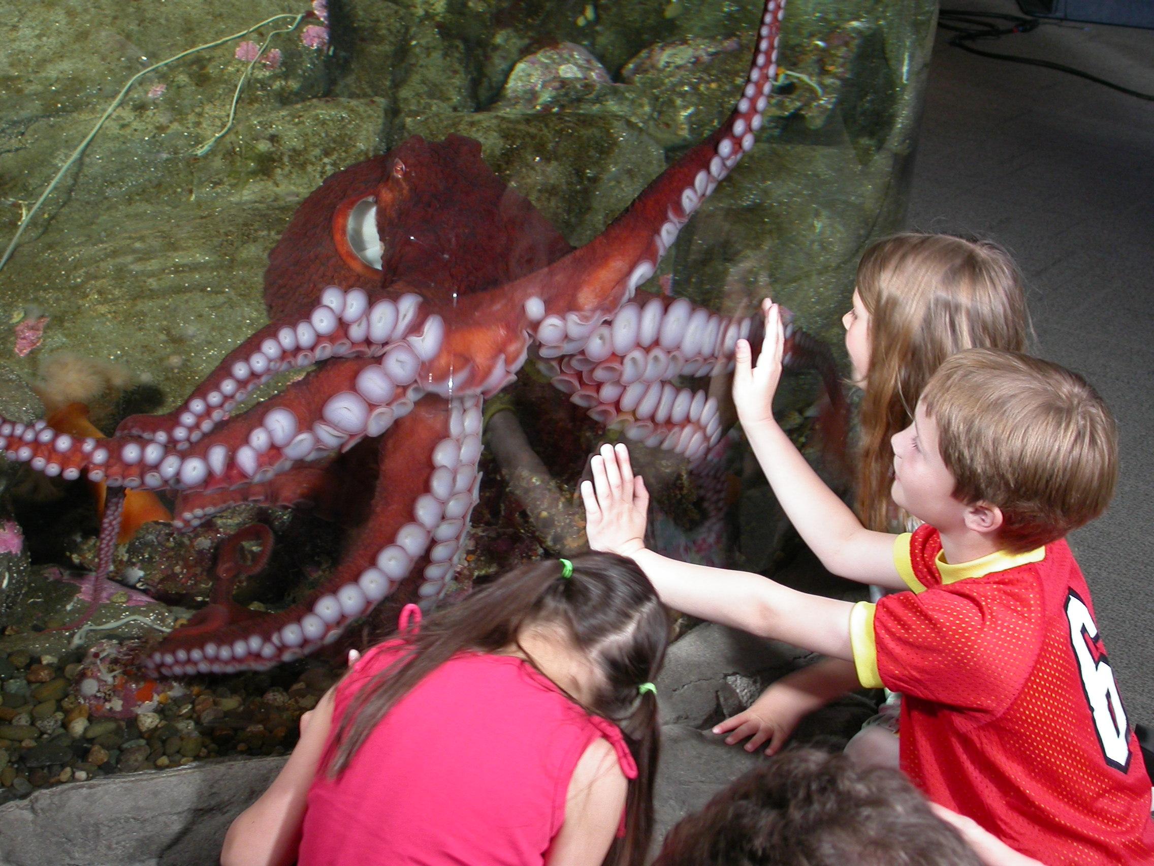 Matchmaking octopus