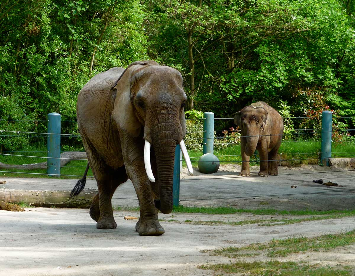 let the zoo elephants go Places in us where you can visit elephants  zoo lost one of their elephants a few years  abused elephants and their whole mission is to let them decide .