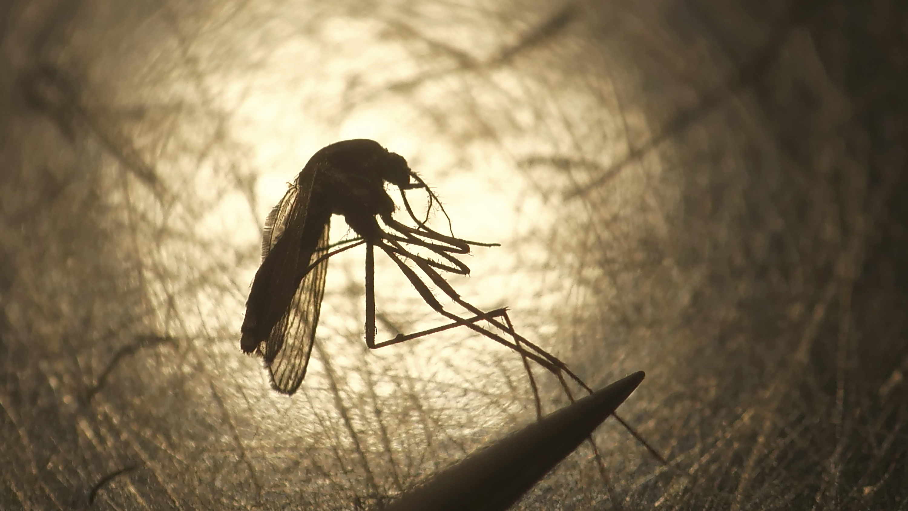 To Stop Diseases Like West Nile Wsu Scientists Are Feeding Blood