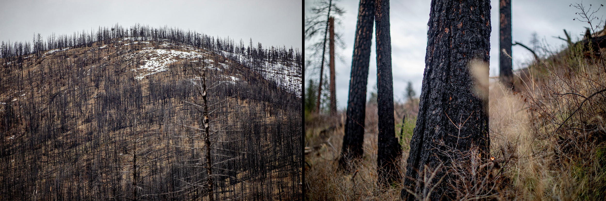 Evidence from previous wildfires in the Methow Valley