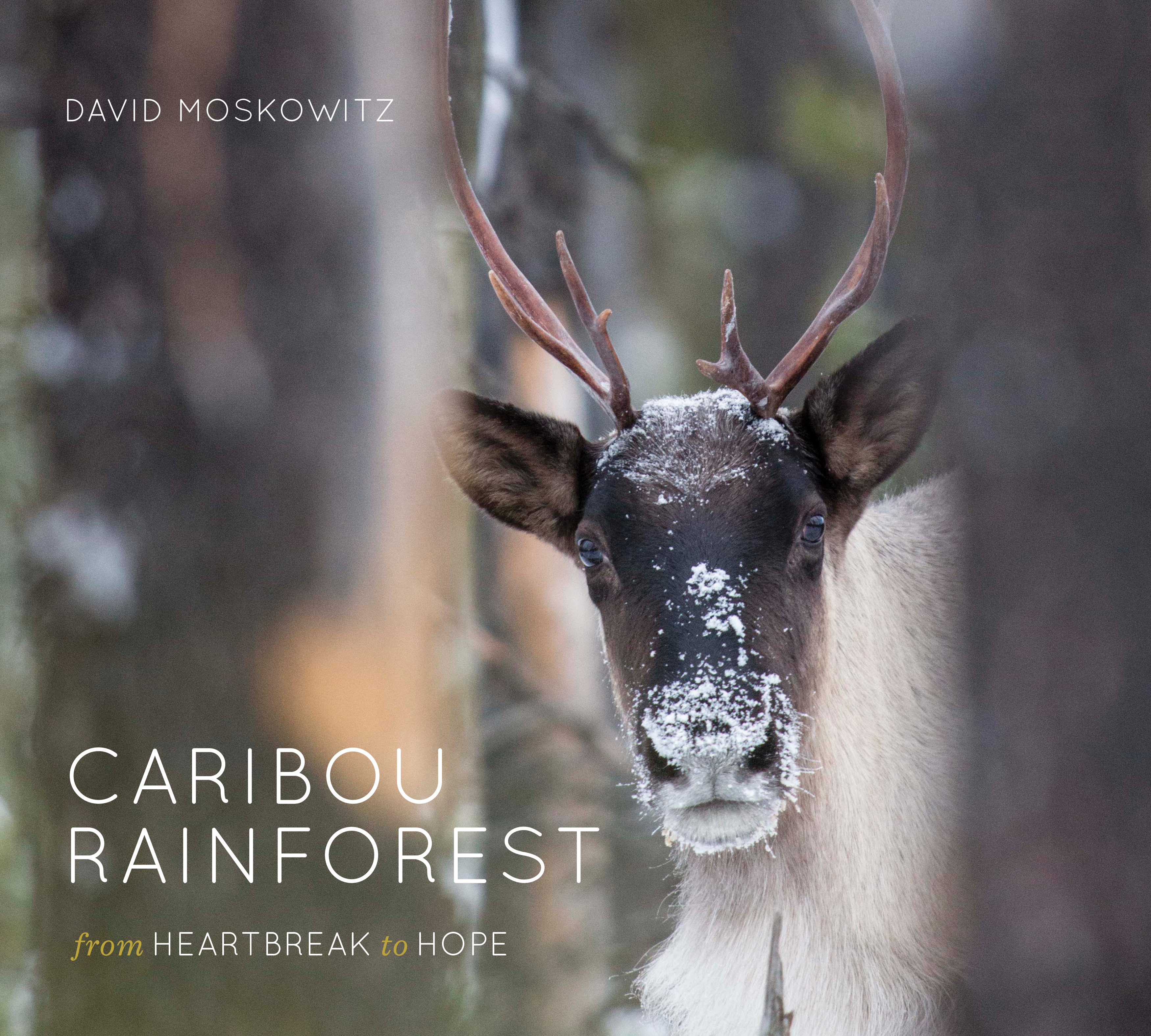 Caribout Rainforest Book Cover