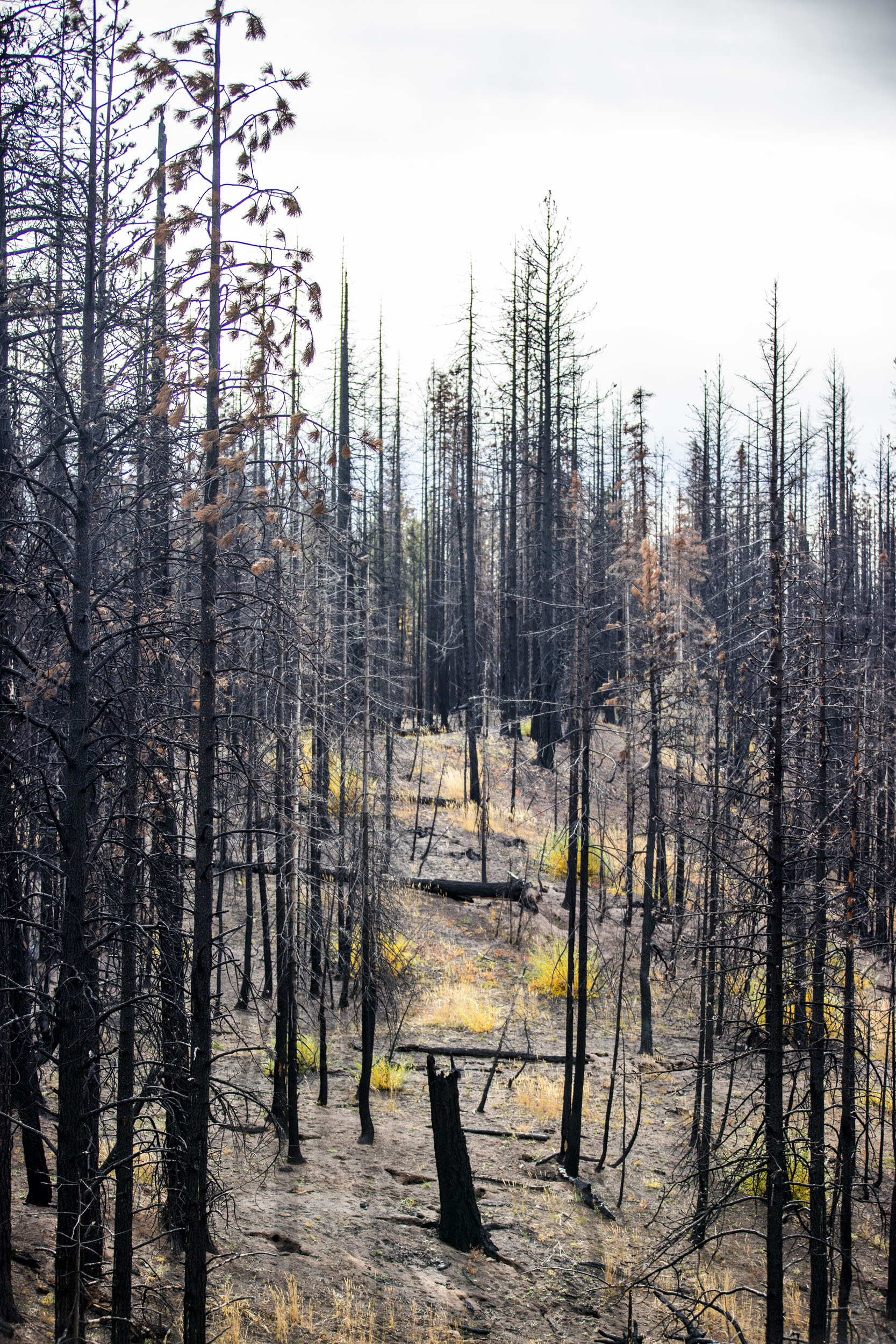 The site of the 2017 Jolley Mountain Fire is pictured on Wednesday, Oct. 24, 2018. The Department of Natural Resources is implementing a forest health treatment plan which uses dying forest for cross laminated timber. Franz says this plan will also help keep the cost of wildfire suppression down and make forests more resilient to wildfires. (Photo by Dorothy Edwards/Crosscut)