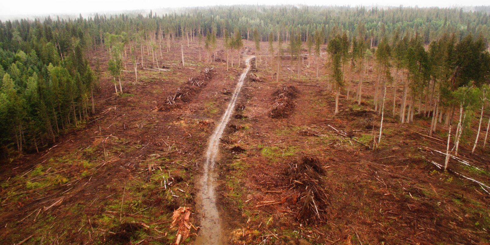 Clear cutting shown in a British Columbia forest