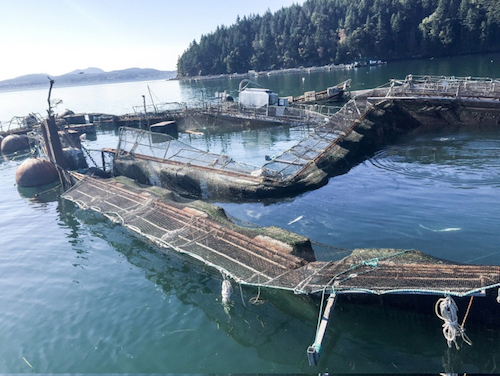 Destroyed net pens at Cooke Aquaculture