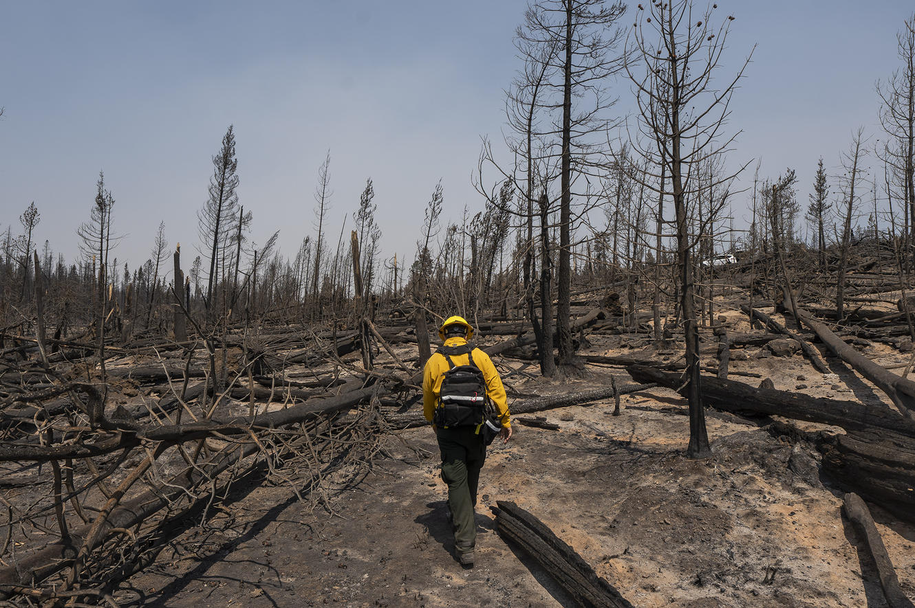 A public information officer with the Bootleg Fire walks through burn damage near the northwest containment line in Oregon.