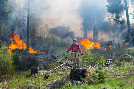 Firefighters in forest amid flames