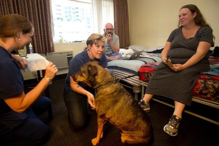 homeless dogs and cats living at Maryís Place new Guest Rooms
