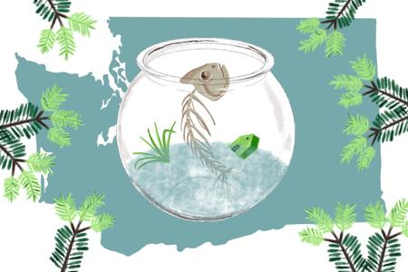 An illustration of Washington state with a fishbowl and a fish skeleton inside