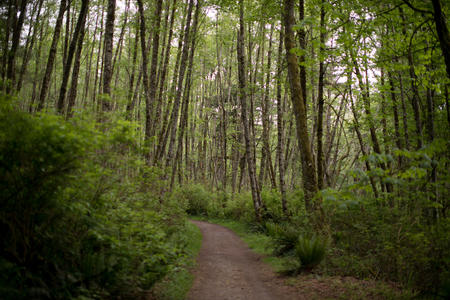 a trail on cougar mountain
