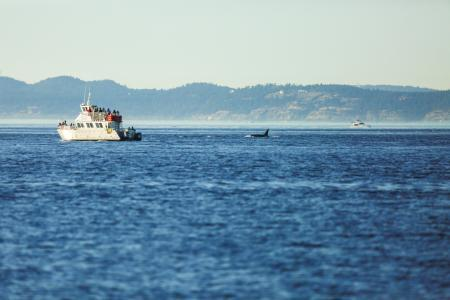 orca whale noise boat