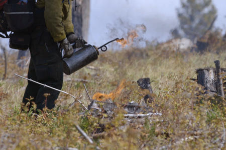 A wildland firefighter ignites grass and other fuels in the forest.