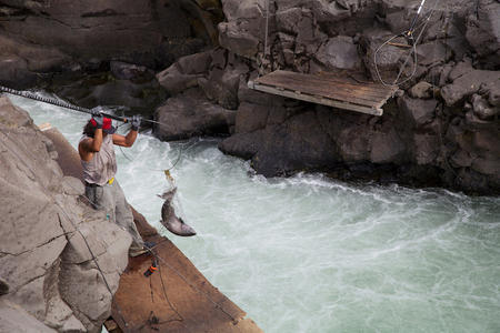 A Yakama tribal member fishes in the Klickitat River for fall Chinook salmon.