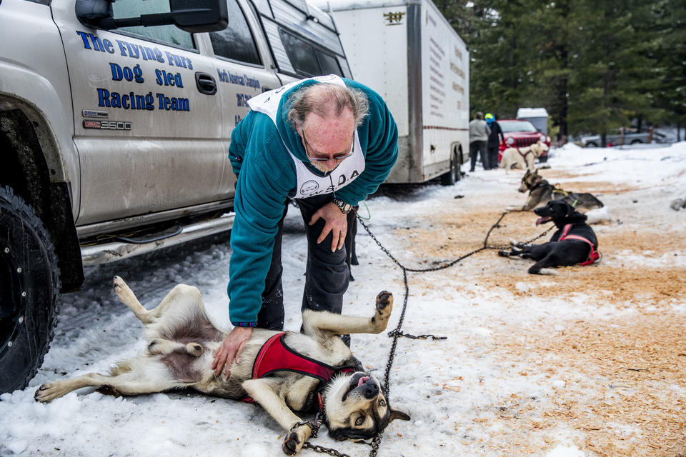 Larry Roxby rewards one of his dogs after finishing his race in the Northwest Sled Dog Association Dogtown Winter Derby at Camp Koinonia in Cle Elum on Saturday, Jan. 12, 2019. (Photo by Dorothy Edwards/Crosscut)