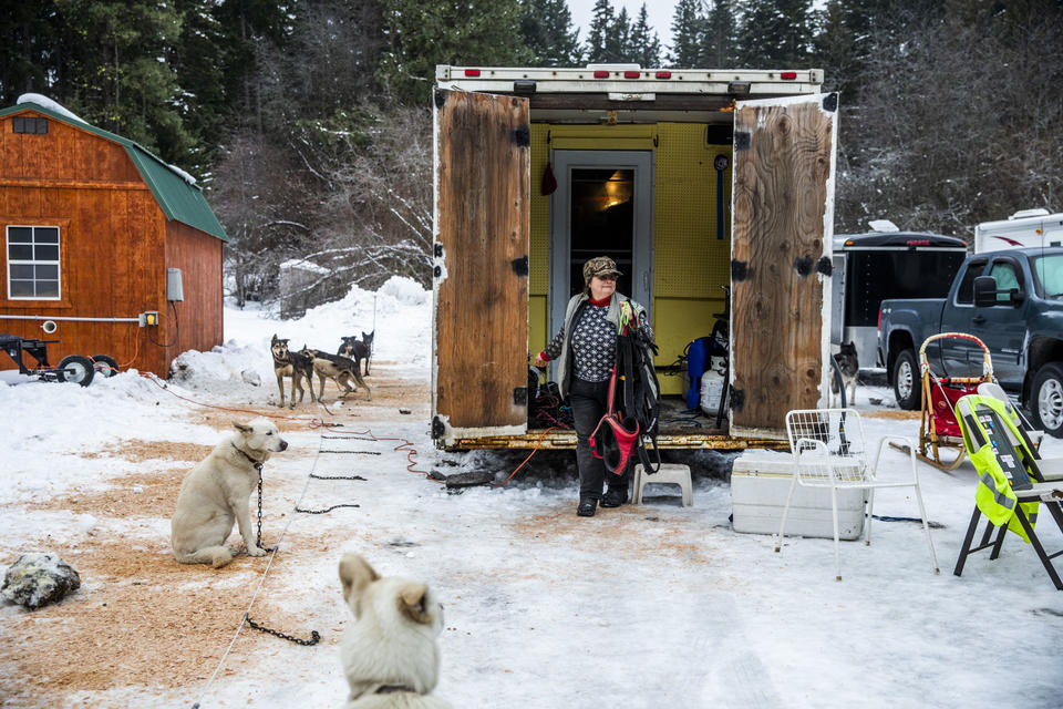 Jeanne Roxby gets her dogs ready for their first race of the day during the  Northwest Sled Dog Association Dogtown Winter Derby at Camp Koinonia in Cle Elum on Saturday, Jan. 12, 2019. (Photo by Dorothy Edwards/Crosscut)