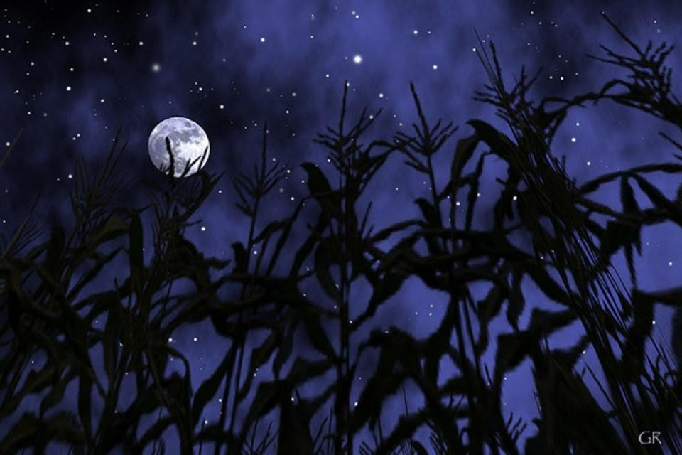 Cornfield_by_Moonlight_Gita_Rau_Flickr.jpg
